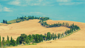 The old cypress road to the farm between fields in Tuscany, Ital Stock Photography