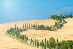 The old cypress road to the farm between fields in Tuscany, Ital Royalty Free Stock Photography