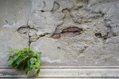 Old damaged concrete wall Royalty Free Stock Images