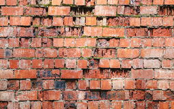 Old damaged red brick wall with moss Stock Image