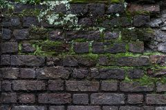Old damaged rustic brick wall with green moss - high quality texture / background stock image