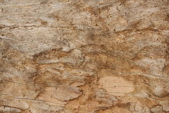 Old  damaged wood background. Old damaged wood wall background. Texture of unfinished wood Royalty Free Stock Photo