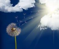 Old dandelion under sun Stock Images