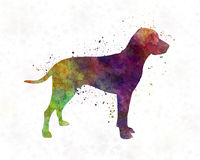 Old Danish Pointer in watercolor Royalty Free Stock Photo