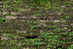 Old dark brick wall with  green moss. Old dark brick wall with  green moss Royalty Free Stock Photos