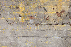 Old dark concrete wall with yellow lichen Stock Images