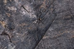 Old dark wood texture with cracks royalty free stock photo