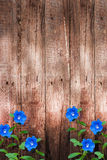 Old dark wood wall with blue flowers background Royalty Free Stock Image