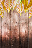 Old dark wood wall with leaves tree background Royalty Free Stock Photo