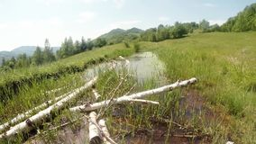 Old dead birch dry in a mountain pond and dragonfly. High in the mountains of ancient Europe in all ponds and puddles in the late spring and early summer various stock footage
