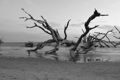 Old dead and fallen tree royalty free stock photos