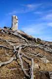 Old dead stump. Royalty Free Stock Photography