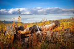 The old dead tree on the background of autumn grass and blue sky stock photo