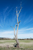 Old and dead tree. On a dry lakebed Royalty Free Stock Photography