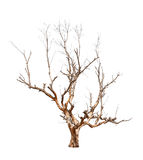 Old and dead tree Royalty Free Stock Photography