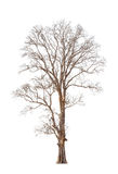 Old and dead tree Royalty Free Stock Images