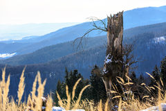 Old dead tree in mountains Stock Image