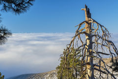 Old dead tree ober an inversion Boise Idaho Stock Photo