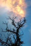 The old dead tree reaching to the beautiful sky Royalty Free Stock Photo