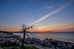 A old dead tree sits at the edge of the pink granite rocks overl Royalty Free Stock Photo