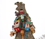 Old dead tree trunk colorful bird nest box hang Stock Image