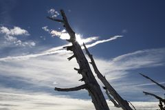 Tree trunk against blue sky and sun one royalty free stock photography