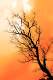 Old dead Tree  on yellow cloud. Royalty Free Stock Photography