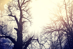 Old dead trees over sky. Royalty Free Stock Photography