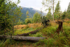 Old dead tress on meadow in mountains Royalty Free Stock Image