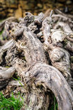 Old dead vines in gathered deadwood Stock Photos