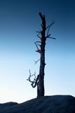Old death tree trunk on rocky peak. Blue hour view Royalty Free Stock Photography