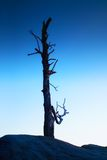 Old death tree trunk on rocky peak. Blue hour view Royalty Free Stock Images