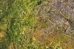 Old decay harvested grass in big green smell mound in corner of garden. Organic fertilizer. Royalty Free Stock Photo