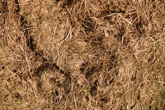 Old decay harvested grass in big green smell mound in corner of garden. Organic fertilizer. Stock Photo
