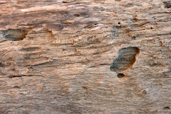 Old and decay wood texture Royalty Free Stock Images