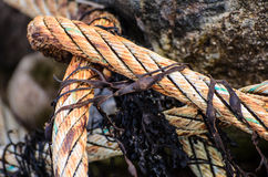 Old and decayed mooring line on shore Stock Image