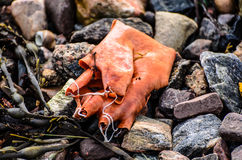 Old and decayed rubber glove Stock Images