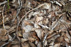 Old Decaying Leaves Texture. An abstract image of old dead decaying leaves heaped in a pile stock images