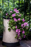 Decorative Chimney Pot with Geraniums. Old decorative chimney pot being repurposed as a plant pot, holding trailing geraniums and fuchsias royalty free stock photo