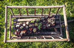 Old decorative wooden cart with various planted cacti in the gar Stock Photography