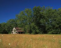 Old decrepit barn in pasture. Rural Missouri barn in pasture with wild flowers Royalty Free Stock Images