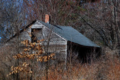 Old, decrepit cabin overgrown with weeds and trees. Falling down, bright sunshine, roof leaning in, broken window, no paint, early spring day stock image