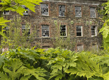 The old derelict building. An old office block or warehouse overgrown with weeds Stock Photography