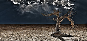 Old Desert Tree Stock Image