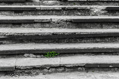 On the old destroyed steps the grass grows. Sprouted juicy green grass on black and white steppes Royalty Free Stock Photos