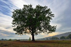 Old detached oak tree at sunset in autumn Stock Photos