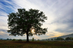 Old detached oak tree at sunset in autumn Stock Photo