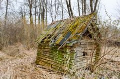 An old, dilapidated little wooden abandoned ruined rustling broken house of wood, logs and sticks covered with moss in the wildern stock image