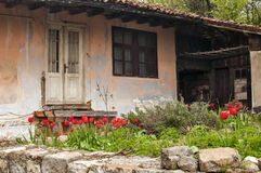 Old dilapidated rustic house. Facade with flowerbed of red tulips Stock Image