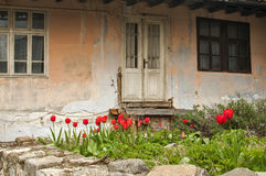 Old dilapidated rustic house. Facade with flowerbed of red tulips Royalty Free Stock Photos